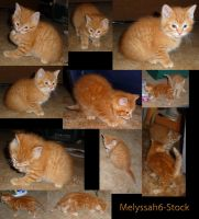 Kitten Stock Collage VII by Melyssah6-Stock