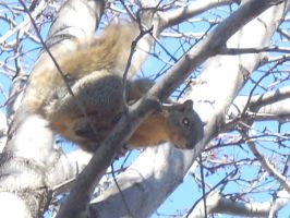 An Agent of the Squirrel Army by soraelna