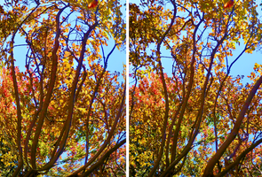 2 Autumn Images by Tailgun2009