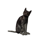 Cat Png Stock 2 by Direwrath