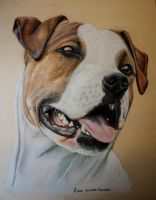 AM stafford Dog with Pastel by Lmk-Arts