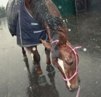 Andretti in the snow. by Minthiy