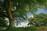 Belvoir Tree, May 2010 by Gerard1972
