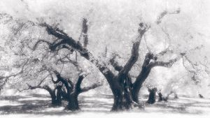 Into the Olive Grove by Mohain