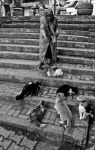 Old woman and cats 1 by emregurten