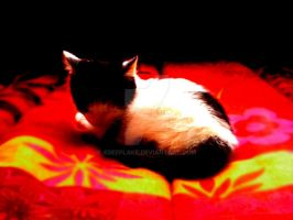 Baby Cat by xdeeplake