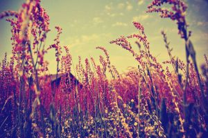 Final Edit of Red Grass by ukeHippie