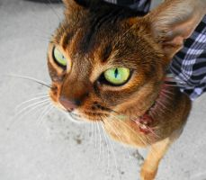 Angry Cat Loves Me by veronicarockstrom