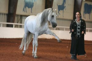 Andalusian Stallion2 by reachthestars-stock