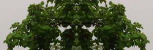 Organic Symmetry 15 by meathive