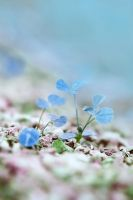 baby blue by mohdfikree