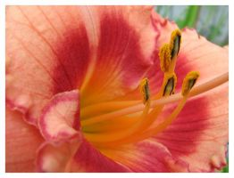 Peachy Keen by picworth1000wrds