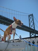Dog Day on the Bay 1 by Shiskababe
