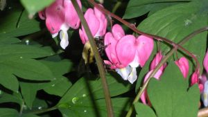 Hearts and Bee by ssg-McGary