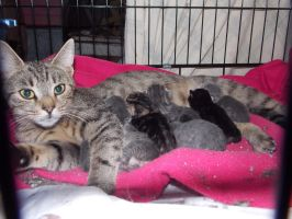 Momma Max and the 'M' Kittens by Essentria