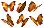 Butterflies PNG Stock by Roys-Art