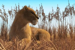 Lioness by Elle-Arden