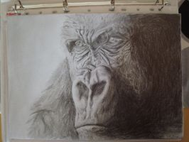 Drawing of a Gorilla by Idator
