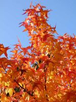 Indian Summer 6 by JanuaryGuest