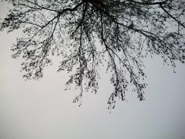 Tree in Wintertime 2 by JulieThatsMe