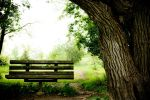 Soft-looking Bench and Tree. by inferno19