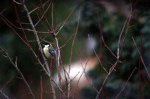 Titmouse on a tree by the roadside by SvitakovaEva