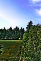 The field 2 HDR by xMAXIx