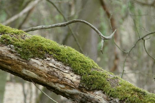 Mossy log Stock 12 by Malleni-Stock