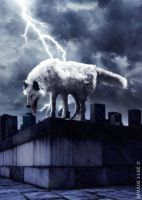 Wolf in the storm by dilarosa
