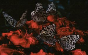 And The Butterflies Feed by redLantern