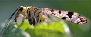 Even insects have to Eat. by FrankAndCarySTOCK