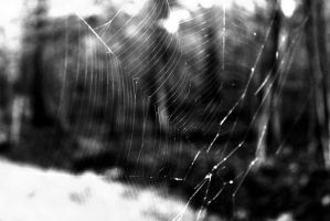 Web by Beth-BethTheColorful