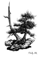 Bonsai by Carles