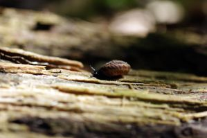 snail 6.25.11 by serealis
