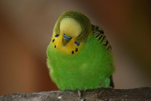 view to budgie 2 by ingeline-art