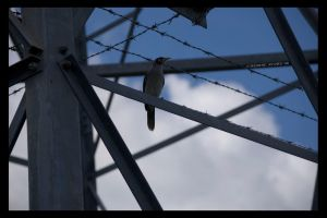 Barbed Birdy by ACDCpincushion