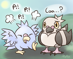 Meeting another Pidove by Pidove
