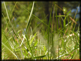 Grassscape 1 by TaoPhotography