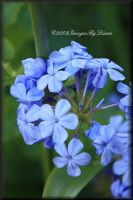 Oh So Blue by SassyPants61762