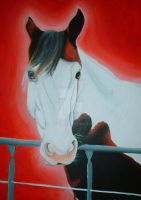 Twisty, paint quarter horse by lucx91