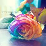 Coloured love by EliseEnchanted