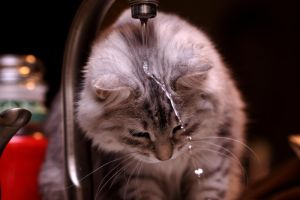 Sasha and Faucet no. 2 by Mischi3vo