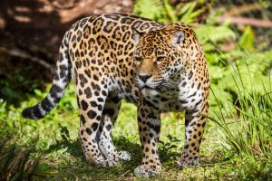 Jag 4 by 904PhotoPhactory