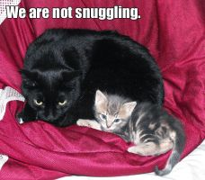 We are not snuggling by WaywardInsecticon