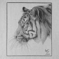 Tiger by FromPencil2Paper