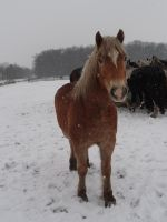 Horse in Snow by Horselover60-Stock