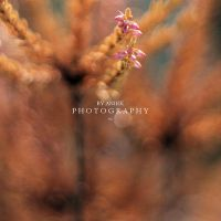Bokeh-Licious by AniekPhotography