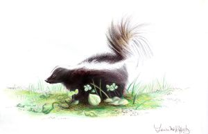 Skunk for Meghan commission by mynti