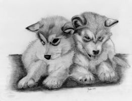 Wolf Puppies Stock Photos  Download 318 Images