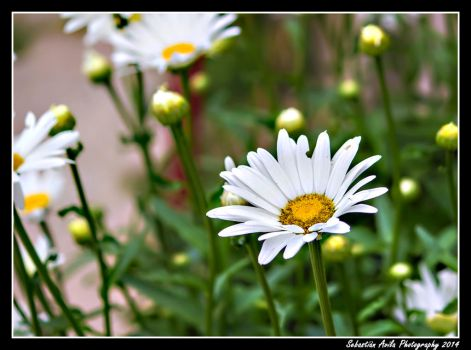 the simplicity of a flower by scorpion2200seba